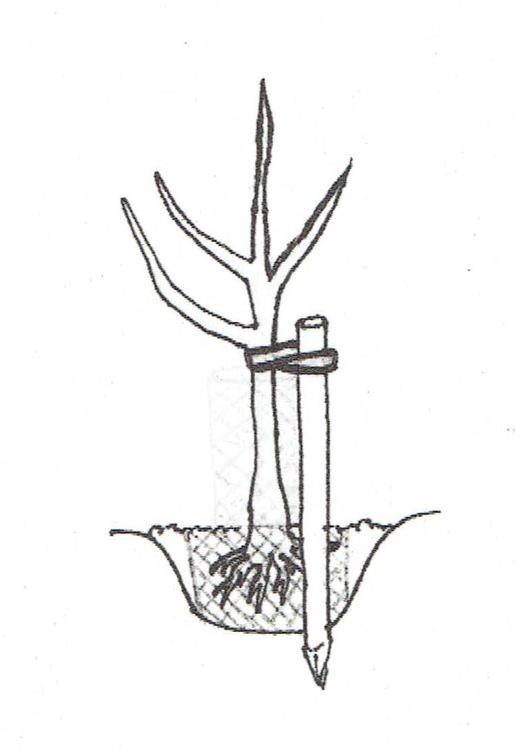 Zeichnung_Anbinden