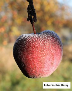 Loblied auf den Apfel
