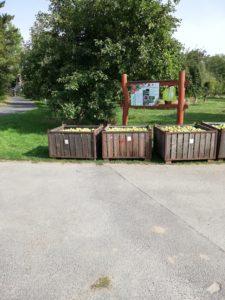 Die Streuobstwiese vom LPV in Hainichen war Anlaufpunkt für die Lions